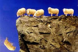 Sheep falling off cliff