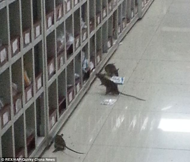 The House of Representative....No, the pic really is of Rats in a Chinese Pharmacy, which is worse?  Uhg!